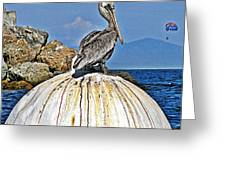 Pelican Power Greeting Card