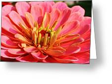 Petals Of Pink Greeting Card