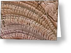 Petrified Wood, Sem Greeting Card