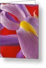 Photograph Of A Dutch Iris Greeting Card
