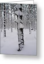 Pine Forest In January Greeting Card