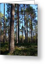Pine Forest Greeting Card