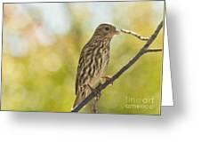 Pine Siskin Greeting Card