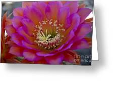 Pink And Orange Cactus Flower Greeting Card