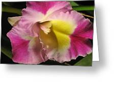 Pink And Yellow Cattleya Orchid Greeting Card