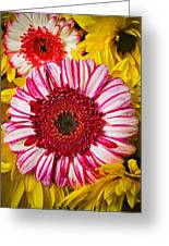 Pink And Yellow Mums Greeting Card