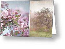 Pink Apple Blossoms Greeting Card by Sandra Cunningham