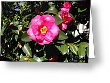 Pink Camelia Greeting Card