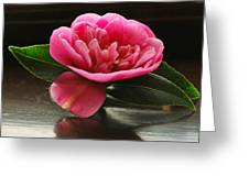 Pink Camellia Greeting Card by Terence Davis