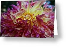 Pink Curls Greeting Card
