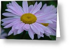 Pink Daisys Greeting Card