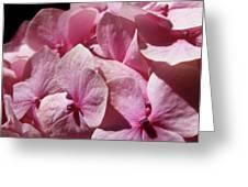Pink Hydrangea Greeting Card