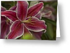Pink-lily Greeting Card