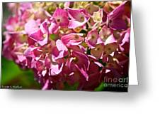 Pink Party Greeting Card