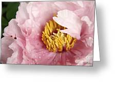 Pink Tree Peony Greeting Card