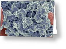 Platelets, Sem Greeting Card