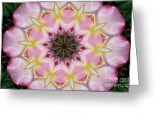 Plumeria 2 Greeting Card
