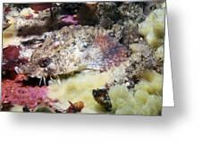 Poacher Fish Greeting Card