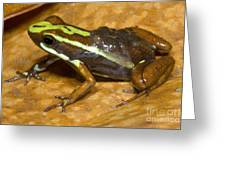 Poison Frog With Eggs Greeting Card