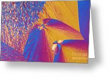 Polypropylene Greeting Card