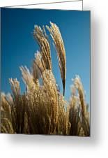 Pompas Grass 1 Greeting Card