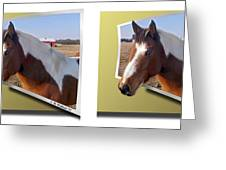 Pony Pose - Gently Cross Your Eyes And Focus On The Middle Image Greeting Card