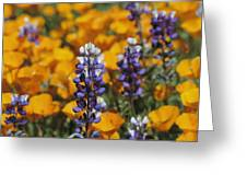 Poppies And Lupine Flowers In A Santa Greeting Card