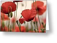 Poppy Flowers 04 Greeting Card