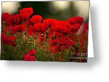 Poppy Flowers 05 Greeting Card