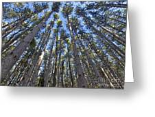 Power In Pines Greeting Card