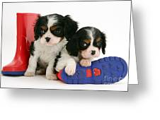 Puppies With Rain Boots Greeting Card