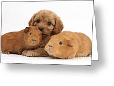 Puppy And Guinea Pigs Greeting Card