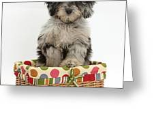 Puppy In A Basket Greeting Card