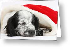 Puppy Sleeping In Christmas Hat Greeting Card