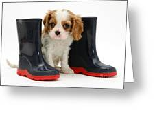 Puppy With Rain Boots Greeting Card