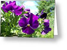 Purple Delight Greeting Card