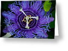 Purple Flower 1 Greeting Card