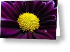 Purple Jewel Greeting Card