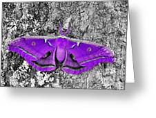 Purple Polyphemus Greeting Card