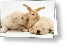Rabbit And Puppies Greeting Card