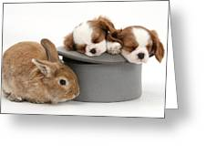 Rabbit And Spaniel Pups Greeting Card
