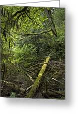 Rain Forest On Vancouver Island Greeting Card