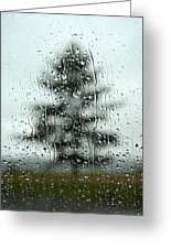 Rain Tree Greeting Card
