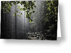 Rainforest, Bellingen, Australia Greeting Card