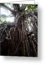 Rainforest Tree Greeting Card