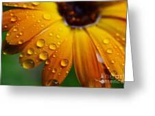 Rainy Day Daisy Greeting Card