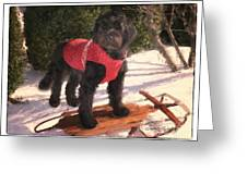 Ready To Sled Greeting Card