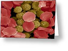 Red And White Blood Cells, Sem Greeting Card