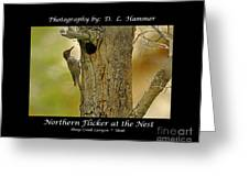 Red-shafted Flicker Greeting Card