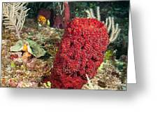Red Sponge Greeting Card